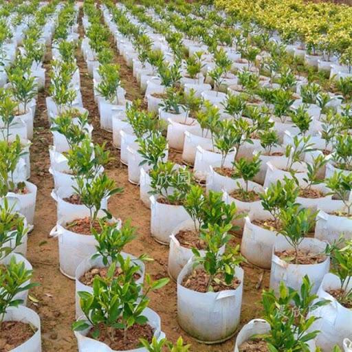 báo giá túi vải trồng cây